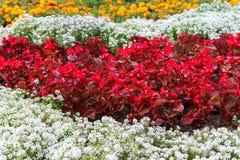 Различные цветки в дизайне Стоковые Изображения