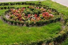 Различные цветки в дизайне Стоковая Фотография RF