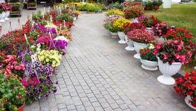 Различные цветки в рынке цветков Стоковые Изображения RF