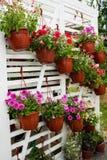 Различные цветки в рынке цветков Стоковые Фото