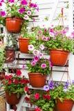 Различные цветки в рынке цветков Стоковое Фото