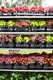 Различные цветки в рынке цветков Стоковая Фотография