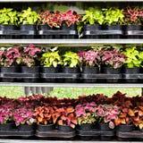 Различные цветки в рынке цветков Стоковые Фотографии RF