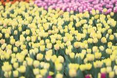 различные цветки и зацветая тюльпаны на hk Стоковое Изображение RF
