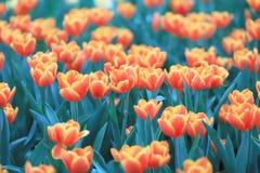 различные цветки и зацветая тюльпаны на hk Стоковые Фото