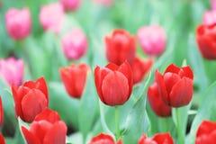 различные цветки и зацветая тюльпаны на hk Стоковая Фотография