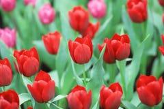 различные цветки и зацветая тюльпаны на hk Стоковая Фотография RF