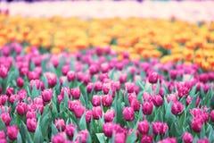 различные цветки и зацветая тюльпаны на hk Стоковые Изображения RF