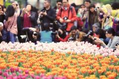 различные цветки и зацветая тюльпаны на hk Стоковое Изображение