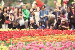 различные цветки и зацветая тюльпаны на hk Стоковое фото RF