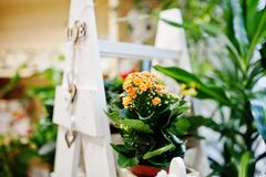 Различные цветки на баках на магазине цветка Стоковое Изображение
