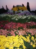 Различные цветки с другими цветами стоковое фото
