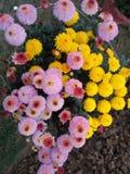 Различные цветки с другими цветами Стоковая Фотография RF