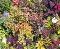 различные цветки Стоковые Изображения RF