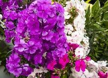 различные цветки Стоковое Изображение
