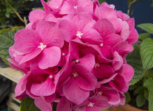 различные цветки Стоковое Фото