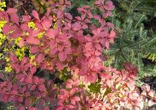 различные цветки Стоковая Фотография