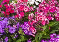 различные цветки Стоковая Фотография RF