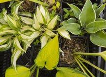различные цветки Стоковое фото RF