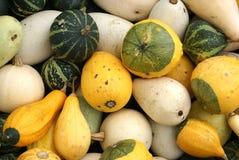 различные gourds Стоковая Фотография