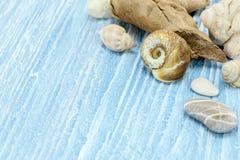 Различные seashells на голубой деревянной затрапезной предпосылке доск Стоковое Изображение