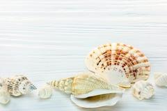 Различные seashells на покрашенных белых деревянных досках Стоковые Изображения RF