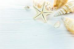 Различные seashells с морскими звёздами на белом деревянном столе Стоковая Фотография