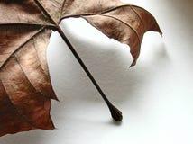 различный взгляд пункта листьев стоковые фото