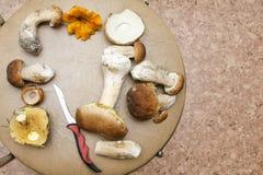 Различный вид грибов Стоковые Фото