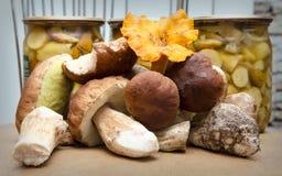 Различный вид грибов Стоковое фото RF