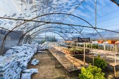 Различный вид цветков и заводов в баках, полиэтиленовых пакетах или комодах стоковые фото