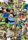 Различный коллаж животных на открытках Стоковые Фотографии RF