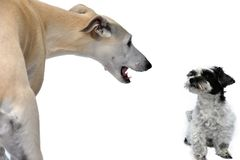 2 различных собаки, большого и очень небольшого стоковое фото
