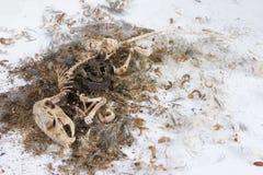 разложенная мышь Стоковое Фото