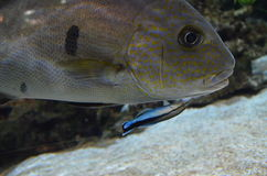 Размеры рыб Стоковые Фотографии RF