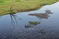 Размещайте 2 велосипедов в реке как символ загрязнения окружающей среды стоковое изображение