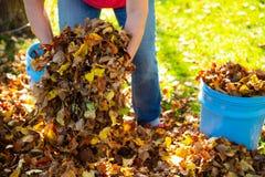 Размещайте листья падения стоковые фотографии rf