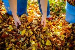 Размещайте листья падения стоковые изображения rf