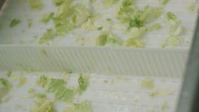 Размещение зеленого салата в специальных коробках сток-видео