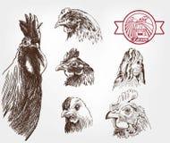 Размножение птицы Стоковое фото RF