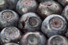 Размораживанные голубики Макрос closeup малая глубина взгляда Стоковое фото RF