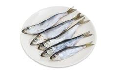 Размороженные прибалтийские сельди на белом блюде Стоковые Изображения RF