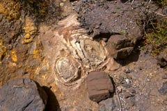 Размывание почвы Стоковое Изображение