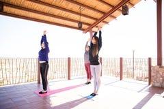 Размышлять в представлении йоги дерева Стоковые Фото