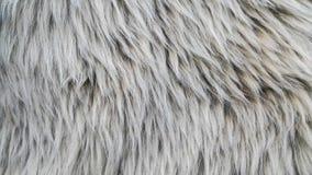 Размягченность шерстей овец Стоковые Фотографии RF