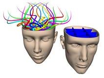 Разница между мозгом женщины и человеком - cartoo Иллюстрация штока