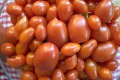 Разнообразие вида томатов Стоковые Изображения