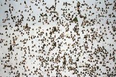 разнообразие видов Стоковая Фотография RF