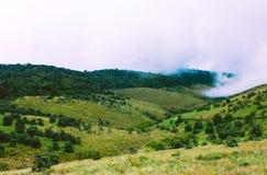 Разнообразие видов Horton упрощает национальный парк, Шри-Ланка Стоковое фото RF