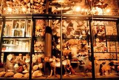 Разнообразие вида жизни на земле в исторической галерее Стоковая Фотография RF